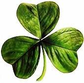 170px-Irish_clover