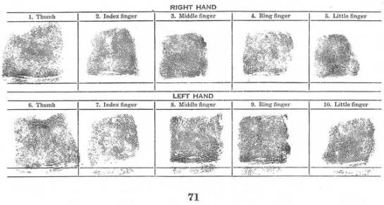 fingerprint identification chart